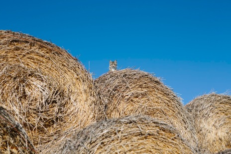 cat and hay